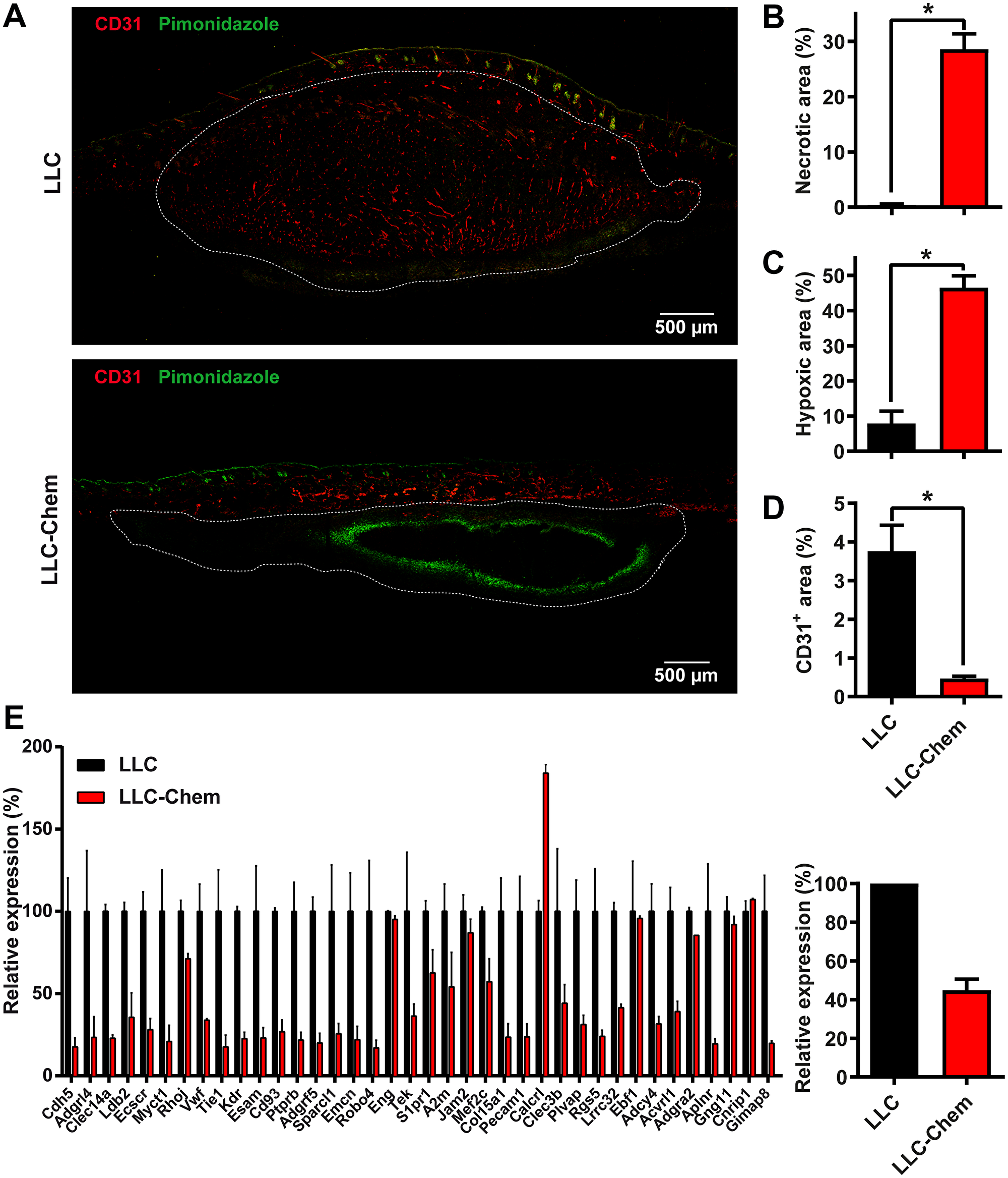 Chemerin expression promotes hypoxia and necrosis in tumors by decreasing angiogenesis.