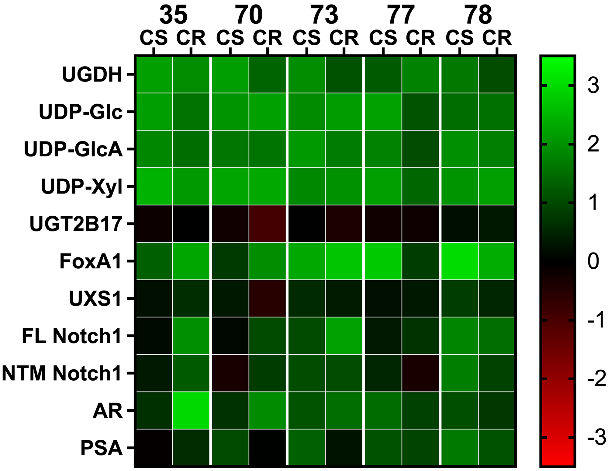 Comparative analysis of gene expression and metabolite levels in PDX tissue.