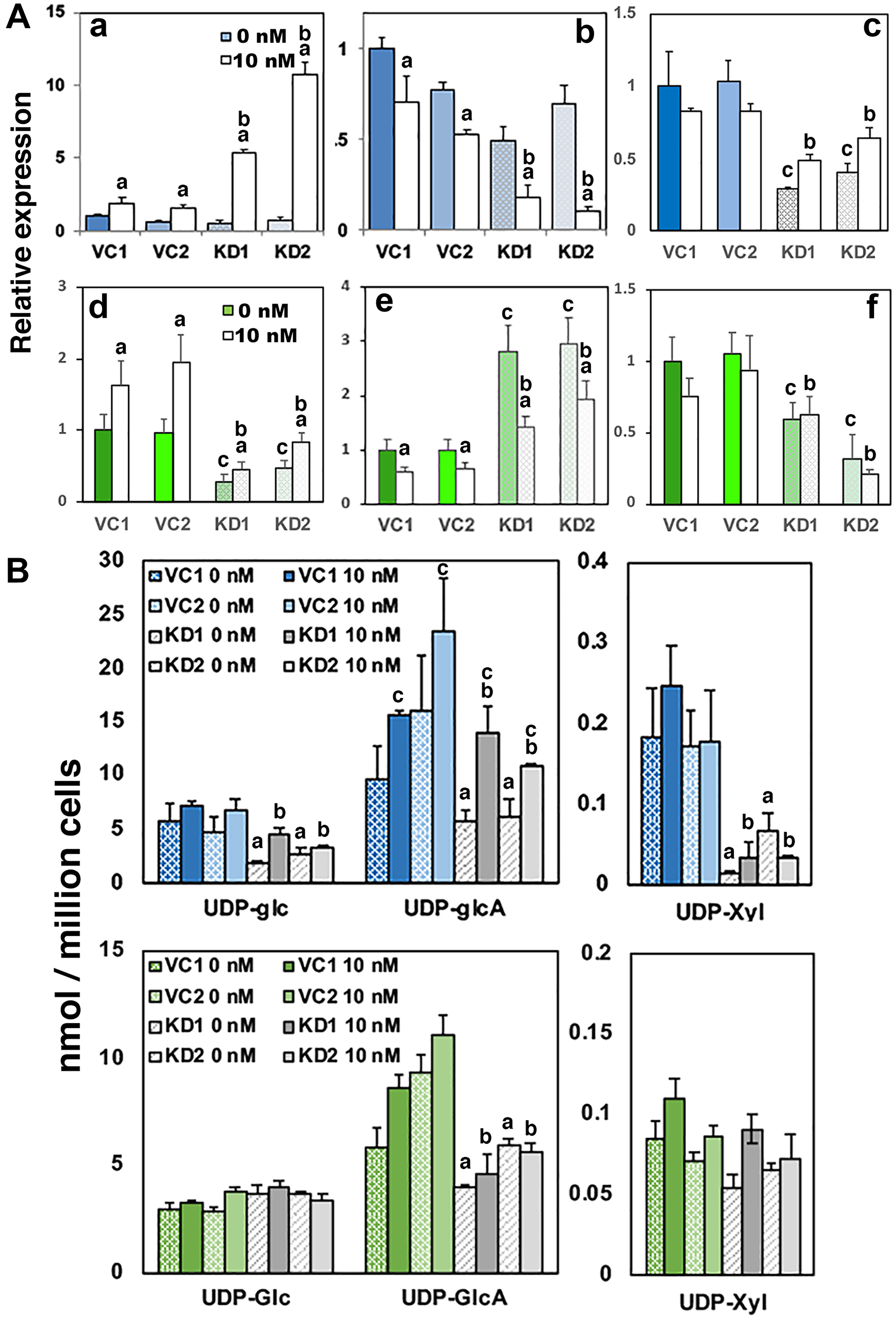Loss of UGDH promotes AR-dependent gene expression and reduces proteoglycan production while sustaining glucuronide output.