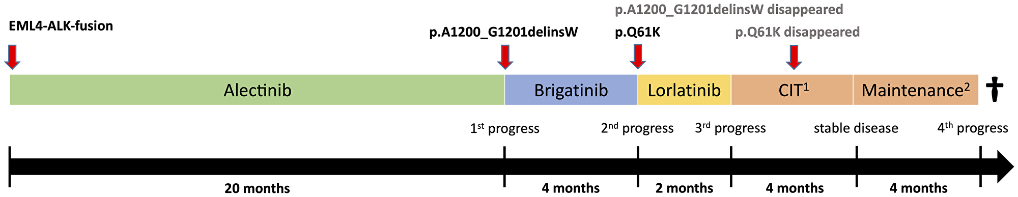 Therapy timeline and polyclonal tumor evolution.