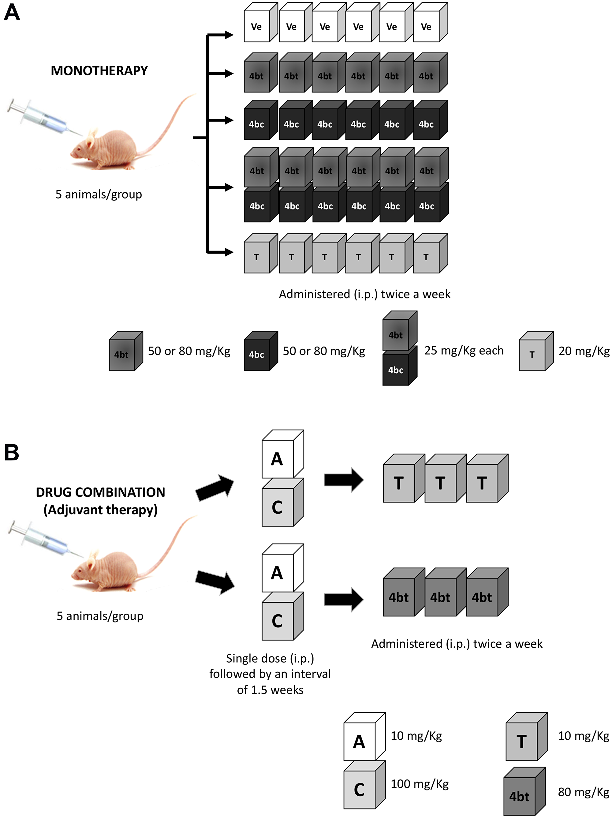 Scheme of therapeutic regimen applied in Balb-c/nude mice bearing breast cancer.