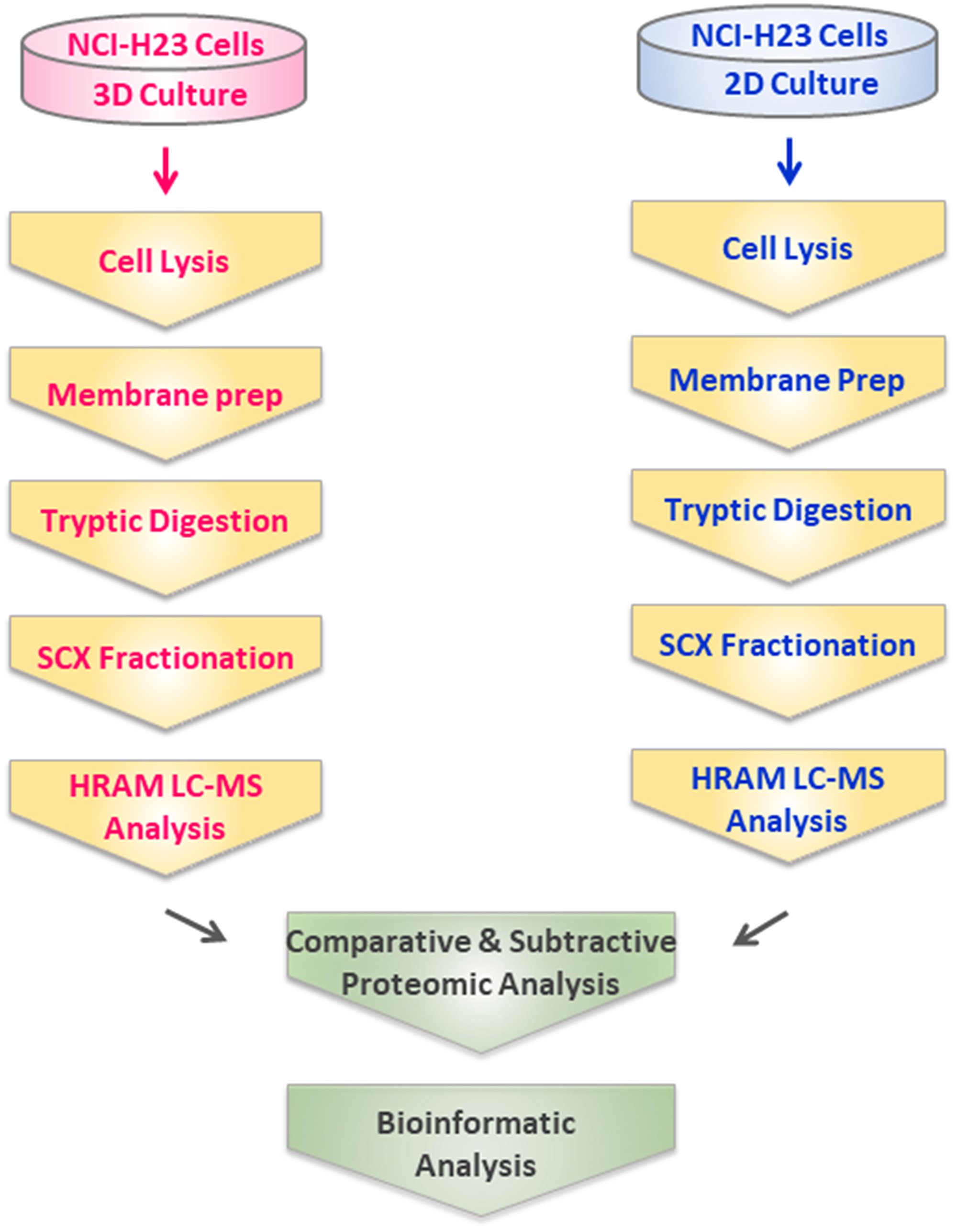 Experimental design and workflow for comparative profiling of 3D- and 2D-cultured NCI-H23 cells using comparative shotgun proteomics.