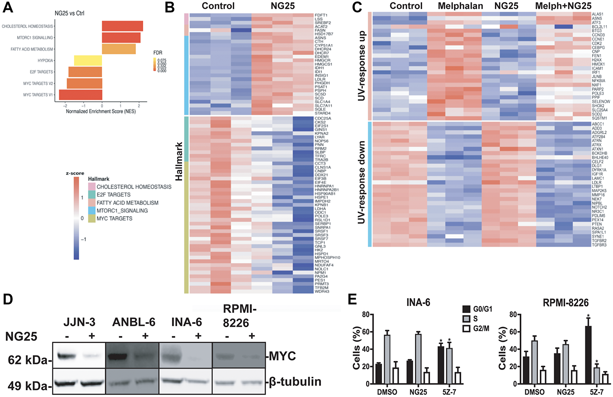 NG25 reduce transcription of oncogenic survival programs.