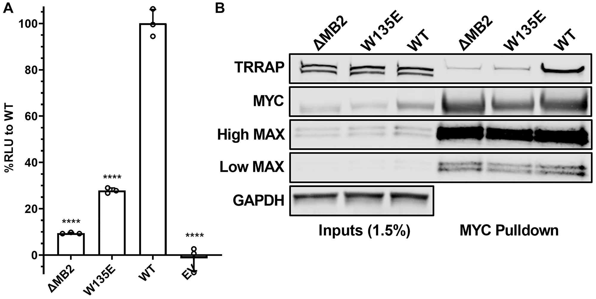W135 is essential for MYC:TRRAP.