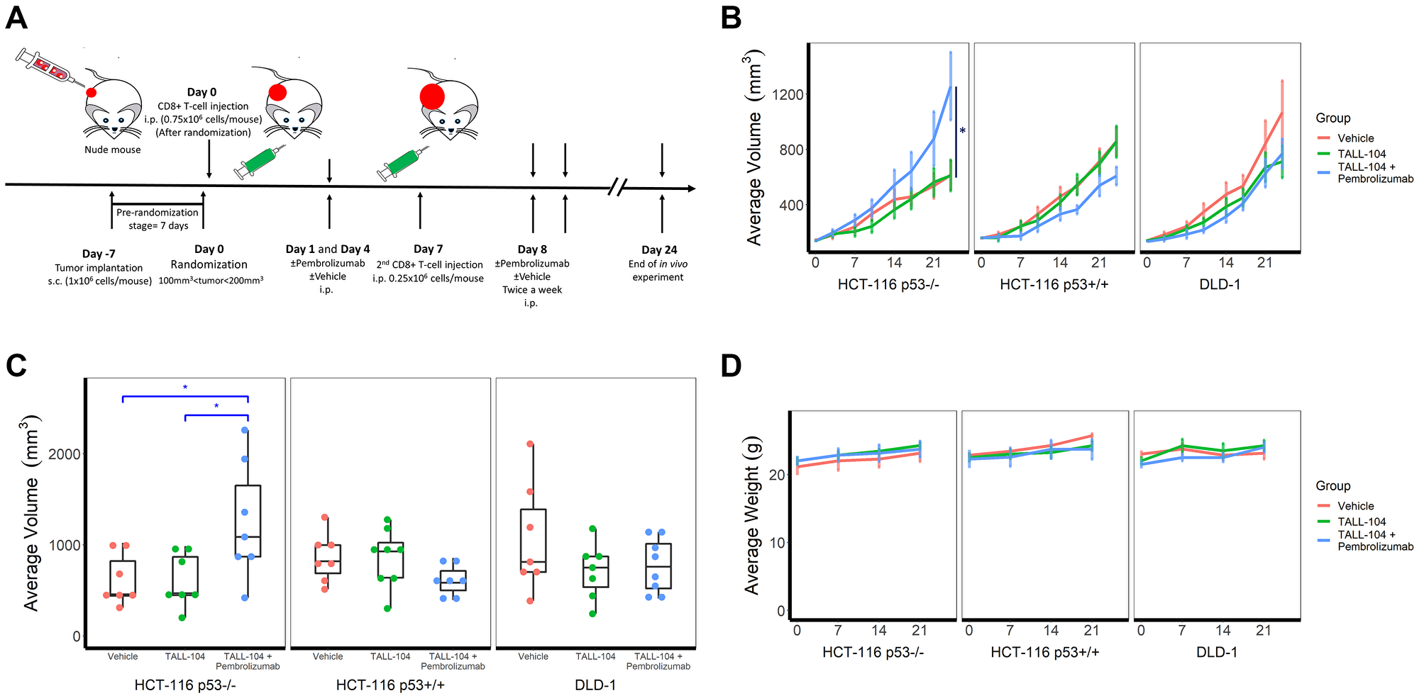 Humanized hyperprogressive disease (HPD)/hyperprogression (HP) cancer immunotherapy model.