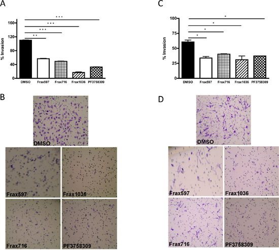 Effects of Pak small-molecules inhibitors on cell invasiveness.