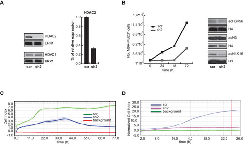 HDAC2 silencing in MDA-MB-231breast cancer cells.
