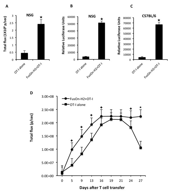 Fig.2: Attractant effect of FusOn-H2 on OT-I cell migration to tumor site and the subsequent in situ expansion of OT-I cells.