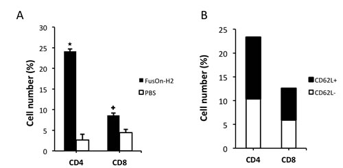 Fig.3: Characterization of T cell subsets of OT-I origin within tumors.