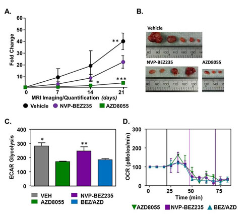 Effects of PI3K and mTOR inhibition on primary tumor development.
