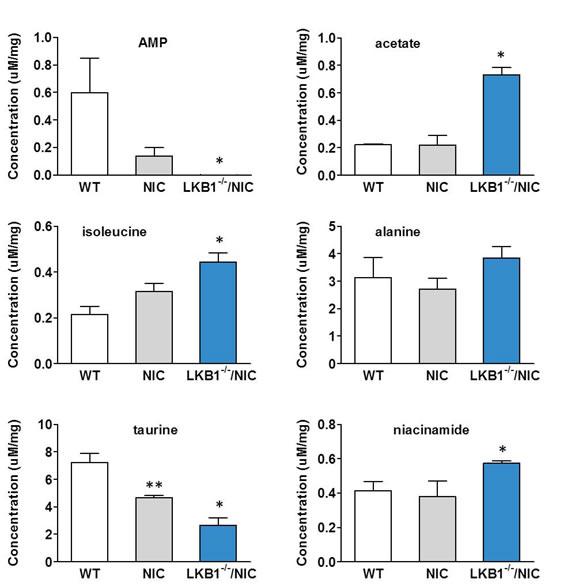 Enhanced metabolism in primary tumor cells lacking LKB1 expression.
