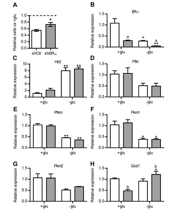 ERα mediates sensitivity to glucose availability.