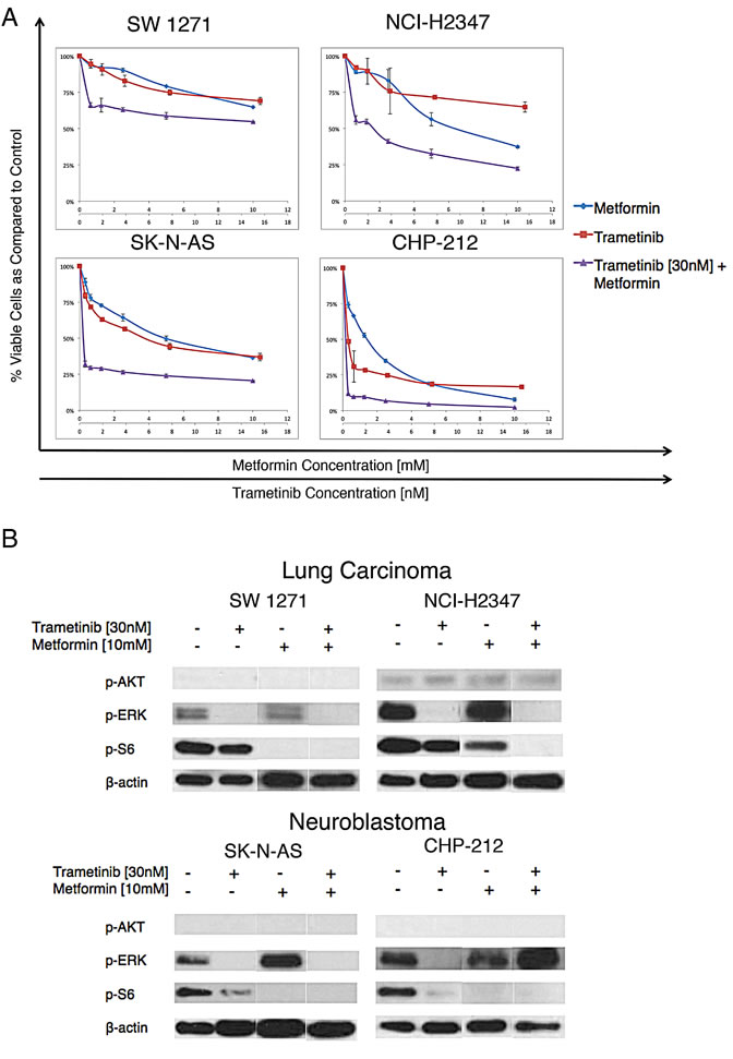 Metformin and trametinib effects on NRAS mutant lung cancer and neuroblastoma cells .