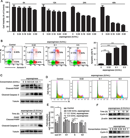 Asparaginase induces growth inhibition and apoptosis in K562 CML cells.