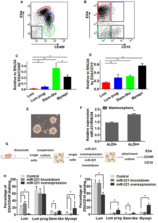 Expression of miR-221 and its role in hiercharies of human mammary epithelium.