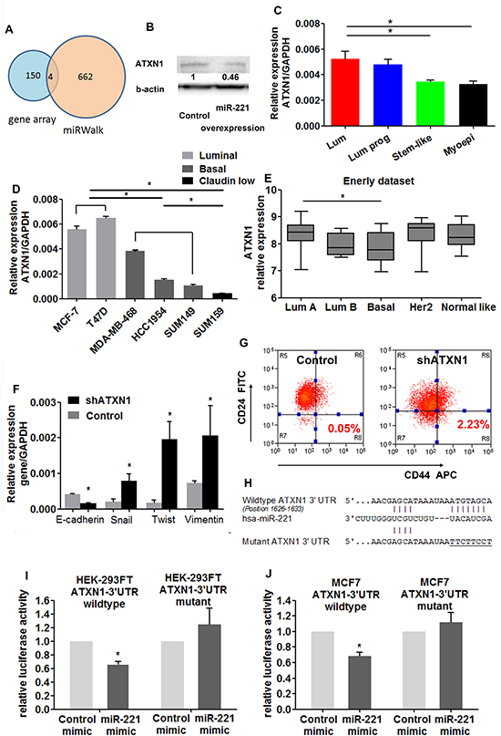miR-221 targets ATXN1 in normal and malignant breast stem-like cells.