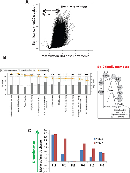 Proteasome inhibitor BZM causes global DNA hypomethylation including Noxa and other Bcl-2 family members in tumor cells from MCL patients.