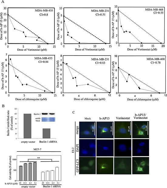 DUB and autophagy inhibitors synergistically kill TNBC cells.