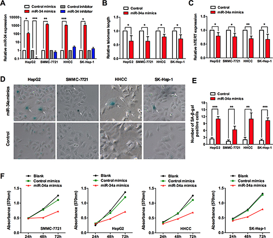 miR-34a induces senescence-associated growth arrest in liver cancer cells.
