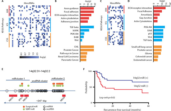 Predicted pathways targeted by oligometastasis-associated microRNAs.