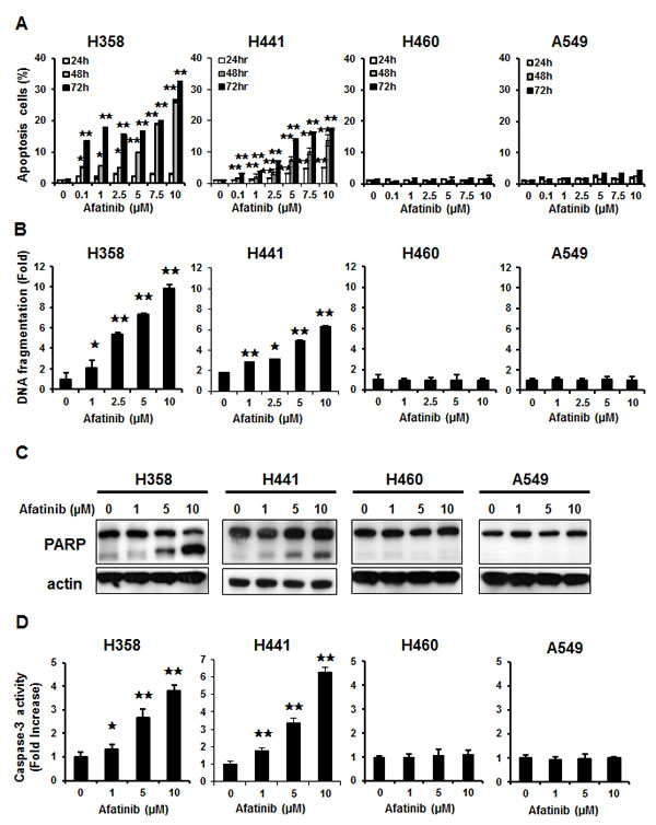 Differential effects of afatinib on cell apoptosis and death in the four human NSCLC cells.