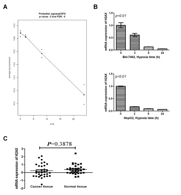 Effect of hypoxia on H2AX mRNA expression in HCC cells.