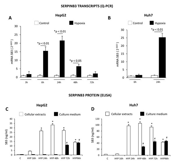 Hypoxic conditions up-regulate SERPINB3 (SB3) expression.