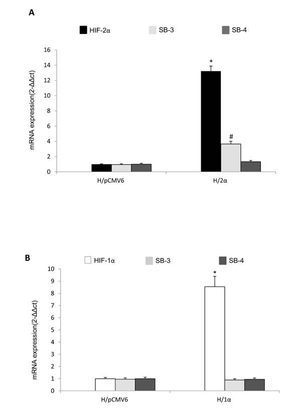Selective relationships between HIF-2α and SERPINB3 up-regulation.
