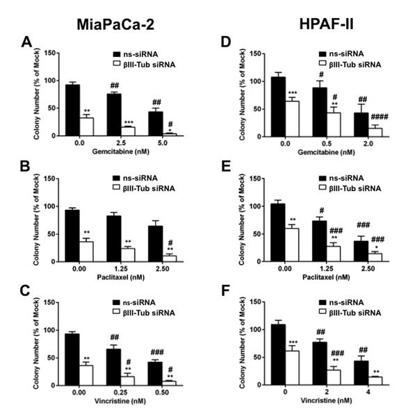 FIGURE 3: The effect of βIII-tubulin silencing on pancreatic cancer cell clonogenic capacity.