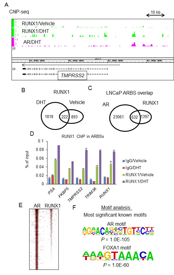 Genome-wide analysis of RUNX1 by ChIP-seq.