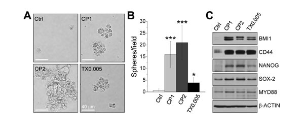 Chemoresistance contributes to stemness.