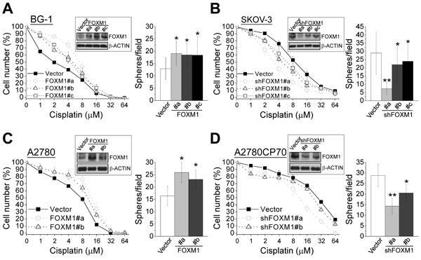 FOXM1 enhances cisplatin resistance and sphere formation in ovarian cancer cells.