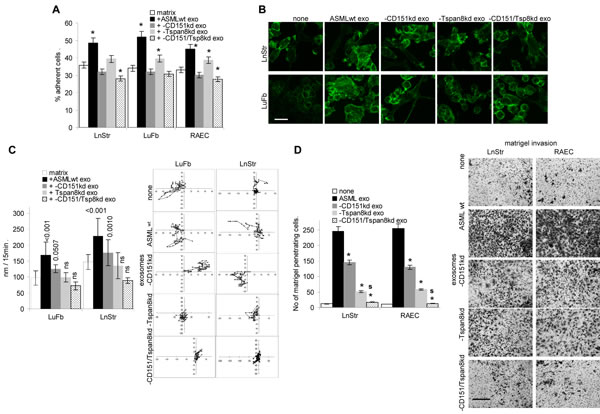 The impact of exosomal CD151 and Tspan8 on host cell adhesion, motility and invasiveness.