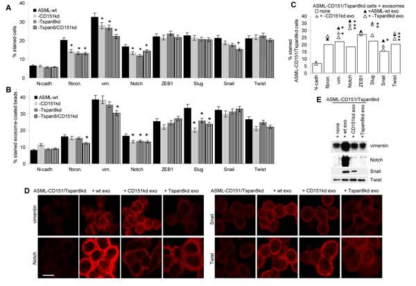 Metastasis-supporting exosomes and EMT: ASML-CD151/Tspan8