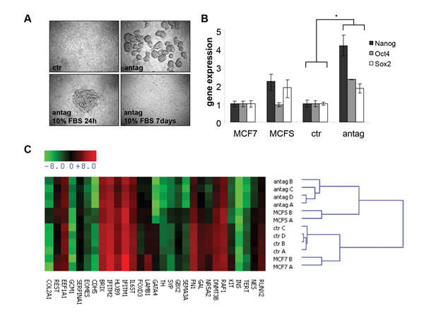 MiR-100 inhibition induces a stem-like phenotype in breast cancer cells.
