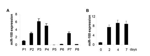 MiR-100 expression increases upon basal-like Breast Cancer Stem Cell (BrCSC) differentiation.
