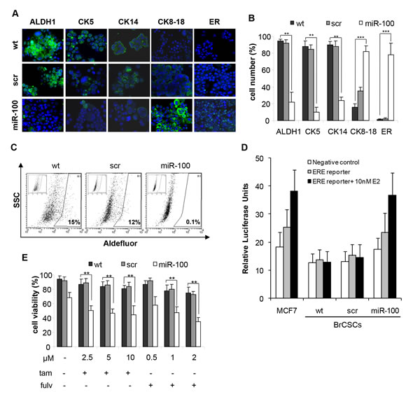 Ectopic expression of miR-100 reduces stem cell markers, promotes luminal differentiation and renders basal-like BrCSCs responsive to endocrine therapy