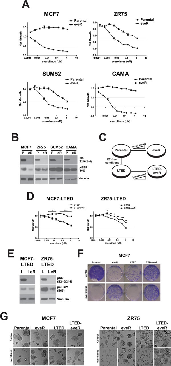 Resistance to everolimus in ER+ cell lines.