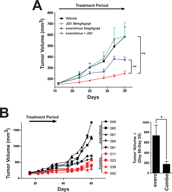Combination of everolimus and JQ1 results in increased tumor growth inhibition in an