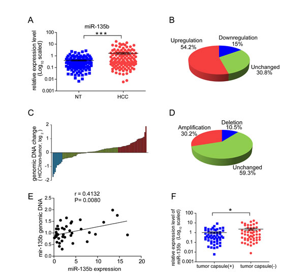 MiR-135b is upregulated in hepatocellular carcinoma (HCC) and its expression is inversely correlated with tumor capsule occurrence.