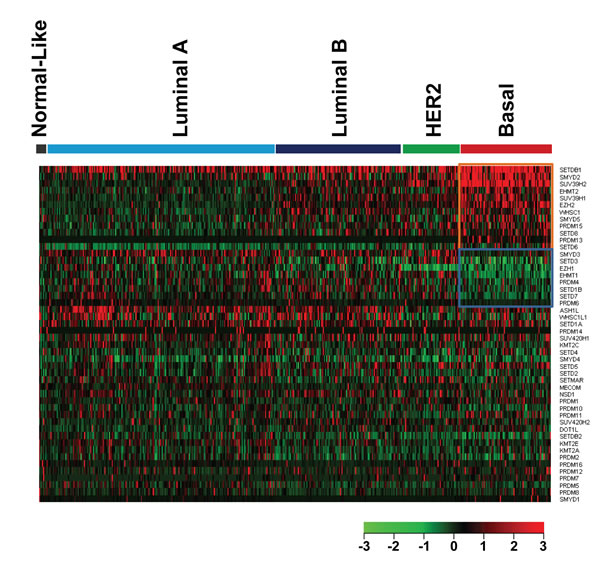 Heatmap of HMT expression profiles in different types of breast cancer.