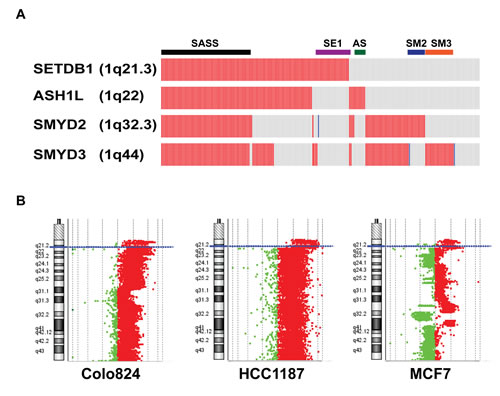 High-level amplification of four HMT genes at chromosome 1q in breast cancer.
