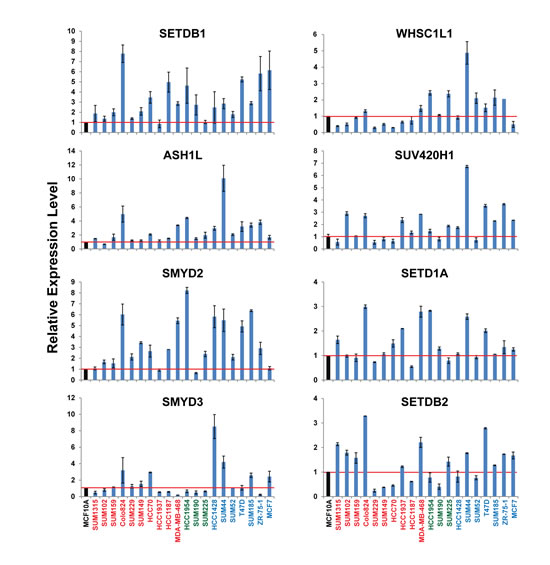mRNA expression levels of eight HMTs in a panel of 20 breast cancer cell lines measured by qRT-PCR.
