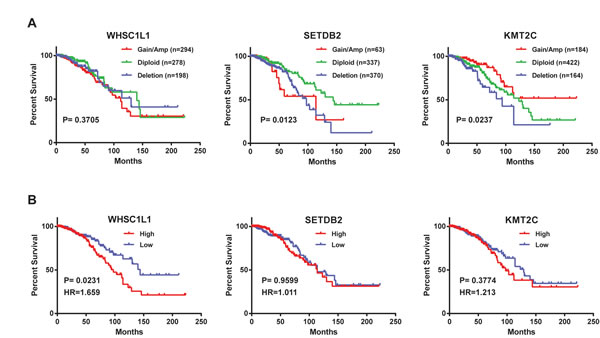 Kaplan-Meier plots of overall survival associated with (A) copy number and (B) mRNA expression levels of three HMTs (WHSC1L1, SETDB2, and KMT2C) in breast cancer.