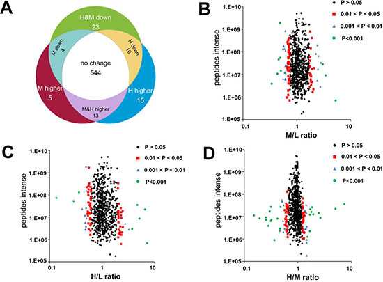 Effect of K-RasG12V activation on mitochondrial proteins expression profiles.
