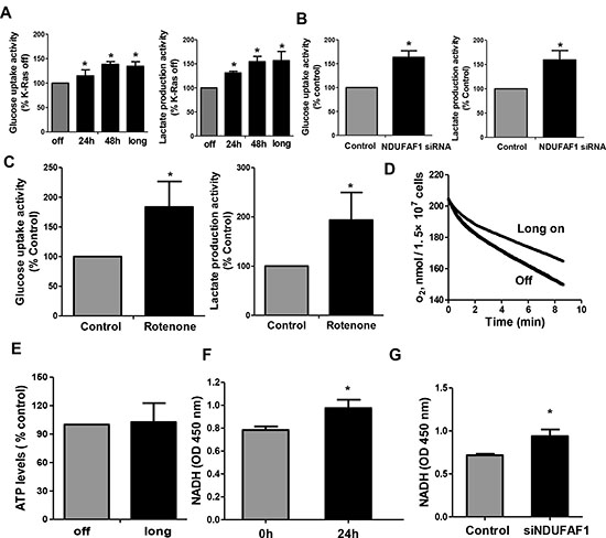 Mitochondrial dysfunction leads to increase of glycolysis activity and accumulation of NADH in T-Rex/293 cells.