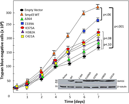 CTD-HSP90 interaction is required for maximal SMYD3 stimulation of cell proliferation rate.