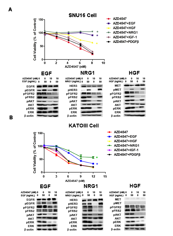 NRG1, EGF and HGF attenuate FGFR2 kinase inhibition in GC cells with FGFR2 amplification.