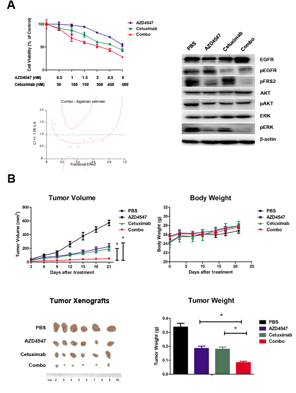 Synergistic antitumor efficacy of AZD4547 and cetuximab on SNU16 cells both
