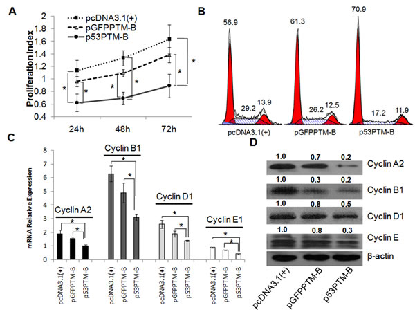 Induction of cell cycle arrest in human colorectal cancer cells (HT-29) through trans splicing-mediated repair of mutant p53 transcripts.